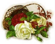 red-white-roses-basket.jpg